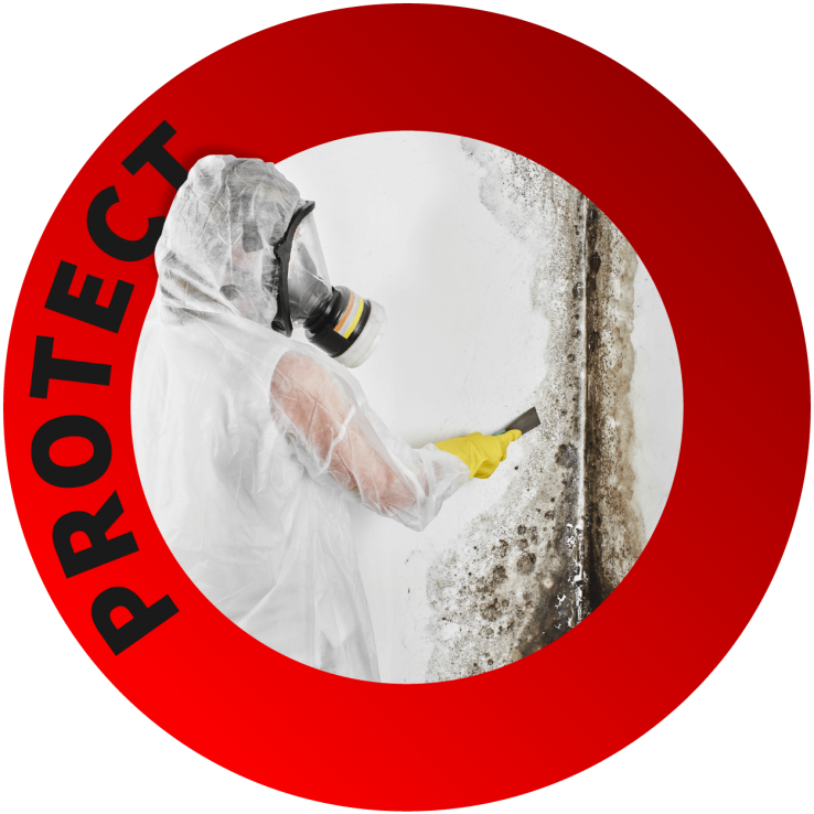 Mould Abatement Toronto - Black Version - Mould Abatement Services - Mould Removal - Hazard Removal - Asbestos Abatement - Nusens Niche Contracting Services in GTA Toronto, Halifax and Vancouver
